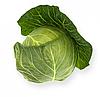 СИЛИМА F1 - семена капусты белокочанной, 1 000 семян, Rijk Zwaan