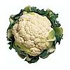 СТАБИЛИС F1 - семена капусты цветной, 1 000 семян, Rijk Zwaan