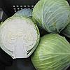 СТОРЕМА F1 - насіння капусти білоголової калібровані, 1 000 насінин, Rijk Zwaan