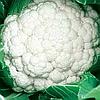 СИНЕРДЖИ F1 - семена капусты цветной, 2 500 семян, Enza Zaden