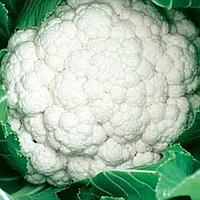 СИНЕРДЖИ F1 - семена капусты цветной, 2 500 семян, Enza Zaden, фото 1