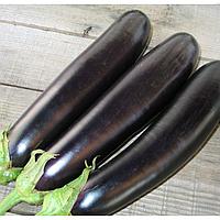 САМУРАЙ F1 - семена баклажана, 1 000 семян, Kitano Seeds, фото 1