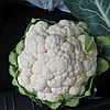 МИСОРА F1 (KS 22 F1) - cемена капусты цветной, 2 500 семян, Kitano Seeds
