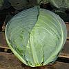 ХИТОМИ F1 - семена капусты белокочанной, 2 500 семян, Kitano Seeds