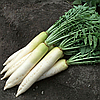 ТИТАН - семена редьки, 250 грамм, Kitano Seeds