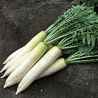 ТИТАН - семена редьки, 250 грамм, Kitano Seeds, фото 1