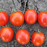 АСВОН F1 - семена томата детерминантного, 5 000 семян, Kitano Seeds, фото 1