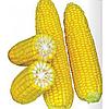 СВИТ ПАРАДАЙЗ F1 - семена кукурузы суперсладкой, 2 500 семян, Lark Seed