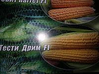 Семена кукурузы Тести Дрим F1,  Agri Saaten (Германия), 5000 семян