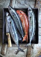 Oборудование для обработки рыбы и мяса Cretel