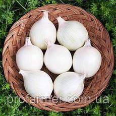 Озимый лук севок Гледстоун 1 кг, фото 2
