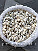 Озимый лук севок Гледстоун 1 кг, фото 3