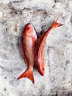 Oборудование для переработки красной рыбы Pisces