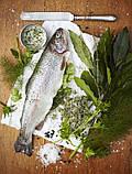 Обладнання для переробки червоної риби Pisces, фото 2