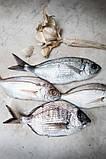 Обладнання для переробки червоної риби Pisces, фото 5