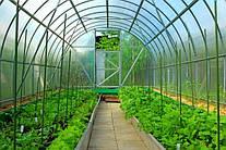 Правові аспекти державної підтримки розвитку органічного виробництва в Україні