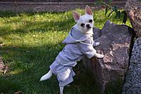 Костюм для собачки трикотажний Турист, фото 1