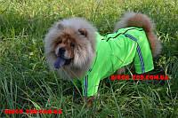 Комбінезон дощовик Турист для собак собака, 28*60 мопс