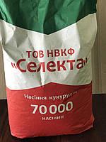 Ранньостиглий, Тривалість Алькор. (ФАО 210) Насіння кукурудзи Селекта
