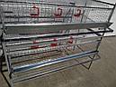 Клетка для перепелов., фото 3