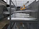 Клетка для перепелов., фото 5