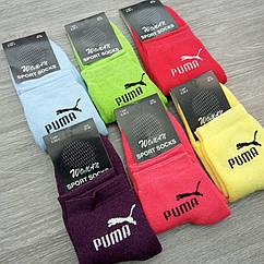 Носки женские спортивные махровые 36-39 р. яркое цветное ассорти 30032537