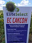 Жаростійкий соняшник під гранстар ЄС САКСОН. Високоврожайний гібрид для Півдня України ЄС САКСОН. Всі фракції є в наявності. Врожай 2021 року.
