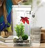 Маленький прямокутний акваріум самоочисний My Fun Fish, фото 2