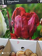 Цибулина тюльпана попугайчатого Bastogne Parrot червоний 11/12 1шт Junior Голландія