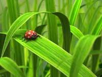 No-till и органическое земледелие - взгляд в будущее