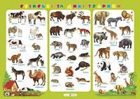 Плакат. Свійські та дикі тварини