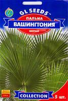 Пальма Вашингтония Веерная 5 сем
