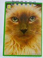 Блокнот А 7 картонная обложка на пружине 40 листов