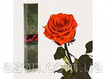 Долгосвежая троянда Вогненний бурштин 5 карат на короткому стеблі