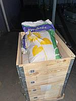 Сингента Ласкала семена подсолнечника Syngenta насіння соняшнику