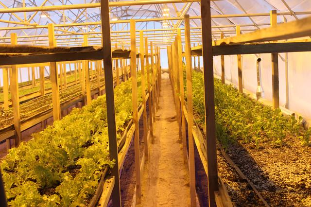 фитолампа для растений купить