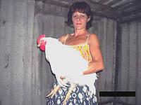 Суточные и подрощенные цыплята бройлера