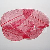 Листья скелетированные красные