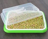 Проращиватель семян лоток для ростков с крышкой 34 x 25 x 5 см, фото 3