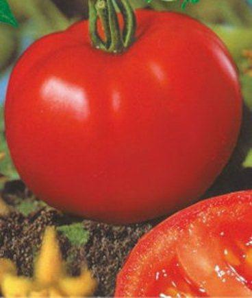 Насіння томатів Сибірський скоростиглий