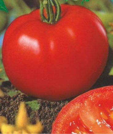 Насіння томатів Сибірський скоростиглий, фото 2