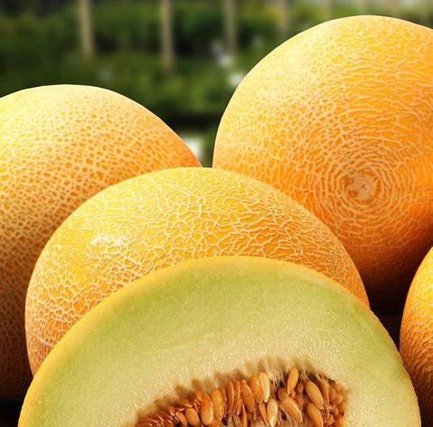 Семена дыни Дидона, фото 2