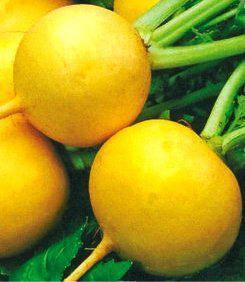 Насіння редиски Злата помаранчева (імп), фото 2