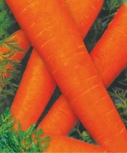 Насіння моркви Флакко (імп)