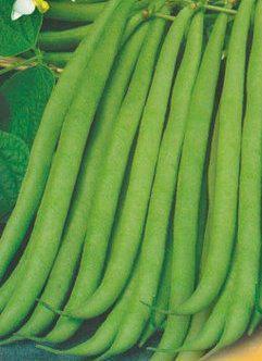 Семена фасоли спаржевой Настенька, фото 2