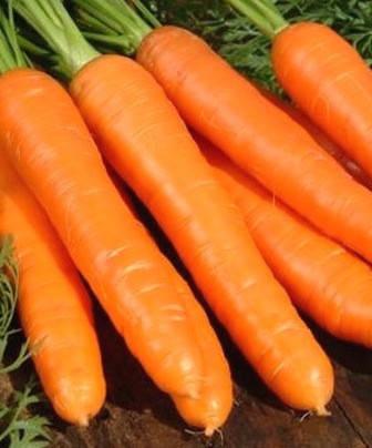 Семена моркови Берликумер (имп), фото 2