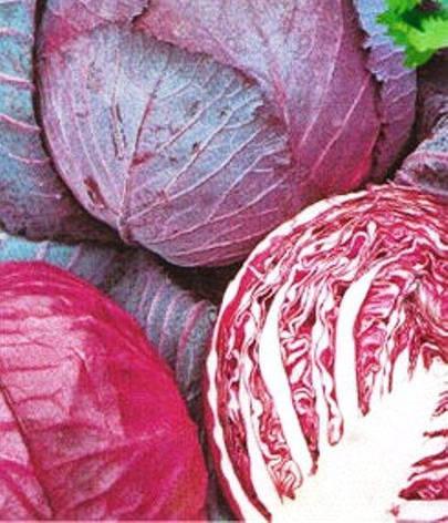 Семена капусты краснокачанной Гако (имп), фото 2