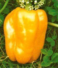 Семена перца Марта Полька желтый (имп), фото 2