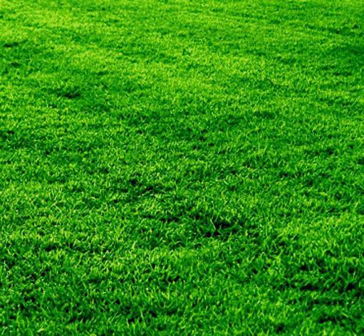 Смесь газонных трав Газон Спасатель, фото 2
