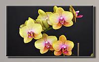 Картина Желтая орхидея HAS-254 91*55